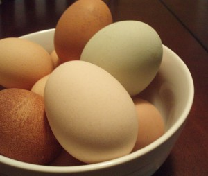 Farm Fresh Eggs and How to Hard-Boil an Egg