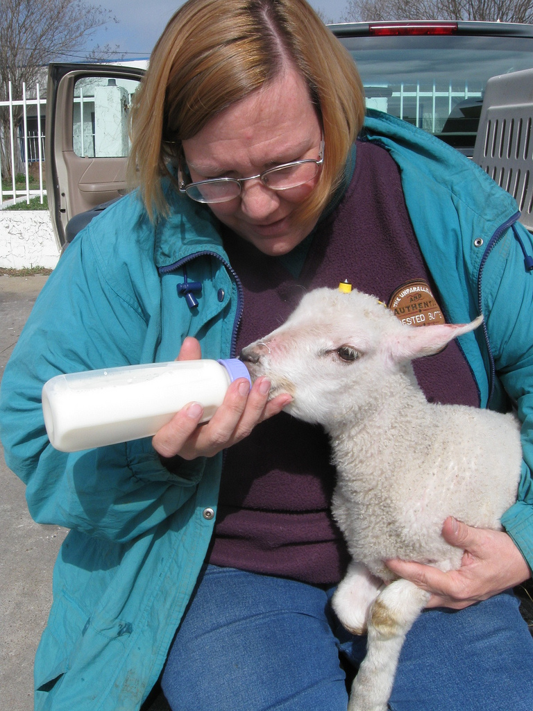 Cindy bottle-feeding a baby lamb